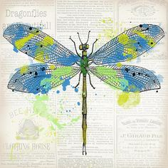 I uploaded new artwork to plout-gallery.artistwebsites.com! - 'Dragonfly On Newsprint-jp3452' - http://plout-gallery.artistwebsites.com/featured/dragonfly-on-newsprint-jp3452-jean-plout.html
