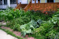 Pictures of Front Yard Vegetable Gardens | One Hundred Dollars a Month