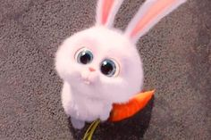 Trendy Ideas The Secret Life Of Pet Rabbit Cute Bunny Cartoon, Cute Cartoon Pictures, Cute Images, Cartoon Pics, Cute Disney Wallpaper, Cute Cartoon Wallpapers, Snowball Rabbit, Foto Cartoon, Rabbit Wallpaper