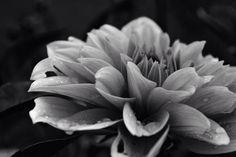 Under the b\w filter, this used to be a pink flower... Anyway, mountain '14. First serious shots with my Nikon D3100.