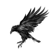 """about Sketch flying black crow on a white background. Image of animal, evil, death - about Sketch flying black crow on a white background. Image of animal, evil, death - 86273037 """"Crow in Flight"""" Sticker by helenlloydart Crow Art, Raven Art, Norse Tattoo, Viking Tattoos, Armor Tattoo, Warrior Tattoos, Raabe Tattoo, Tattoo Drawings, Body Art Tattoos"""