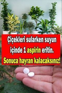 aspirinin çiçek ve bitkilere faydaları