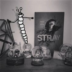 'Stray' by Rachael Craw - Blog Tour Interview, Author, Tours, Adventure, Blog, Adventure Game, Writers