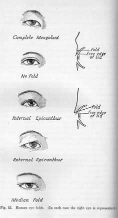 Epicanthic fold - Page 4 Eye Anatomy, Anatomy Study, Anatomy Drawing, Anatomy Poses, Face Reference, Anatomy Reference, Drawing Reference, Epicanthic Fold, Monolid Eyes