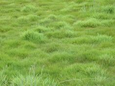 Planted meadow | ... : texture : nature plants grass green textures grounds rough meadow