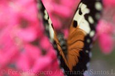Si quieres saber cómo hacer fotos #macro ya sabes...visita mi blog: https://www.ferelbloguero.com/como-hacer-fotografias-macro/?utm_content=buffer664b7&utm_medium=social&utm_source=pinterest.com&utm_campaign=buffer+pinterest.com%2Fpnovacasa