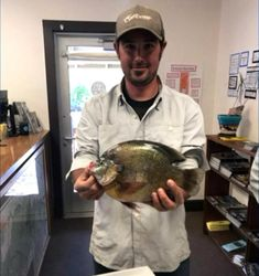 The fish was measured at more than a foot long. It weighed 2 pounds and 9 ounces. sunfish in Totten Reservoir near Durango. Fishing, Fishing Rods, Gone Fishing