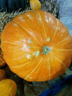 Big beautiful pumpkin