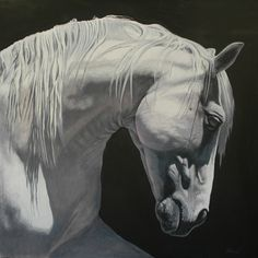 Magellan - Toile cheval noir et blanc 100 x 100 cm Most Beautiful Horses, All The Pretty Horses, Animals Beautiful, Painted Horses, Horse Photos, Horse Pictures, Equine Photography, Animal Photography, White Photography