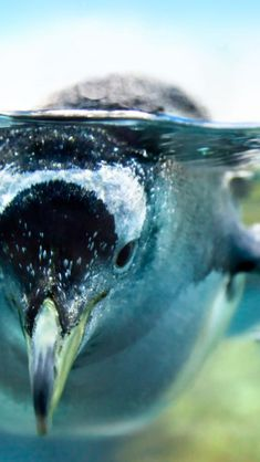 penguin #WOWparksandzoos