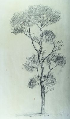 how to draw gum trees - Google Search