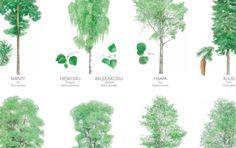 Metsiemme puita.