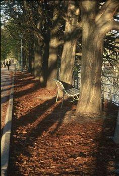 Promenade de fin de journée, l'île aux cygnes paris © Caroline DUEZ