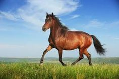 horse pictures - Google Search