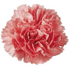 Bring your mom to Canadian Bacon on Mother's Day, Sunday May 11, 2014 for breakfast, lunch or brunch. The 1st 75 mom's will receive a beautiful carnation. Celebrate Mother's Day at Canadian Bacon.