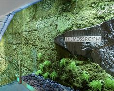 The Moss Room at the Academy of Sciences, designed by Lundberg Design