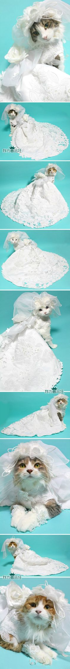 cat`s wedding dress. You have no idea how this makes me feel inside!