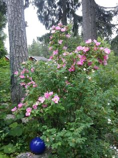 Skoglig trädgård