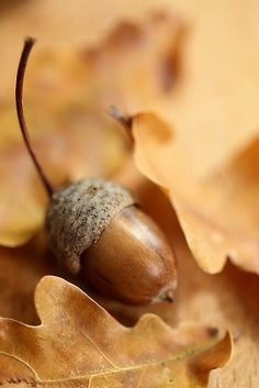 nature in autumn. Love acorns. Imagine the potential in each one.