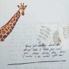 Giraffe in the kruger national park Kruger National Park, National Parks, Giraffe, Finding Yourself, Nature, Decor, Felt Giraffe, Naturaleza, Decoration