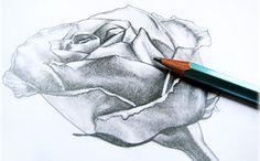 dibujos-de-flores-para-imprimir-y-pintar1.jpg
