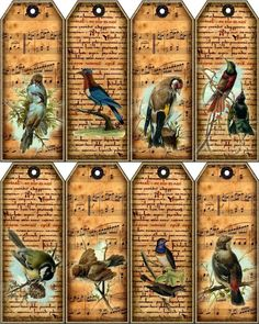 8 Song Birds Music Staff 155 lb Scrapbook Paper Craft Hang Tag Laminated | eBay