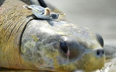 20 Life Lessons We Can Learn From Turtles And Tortoises