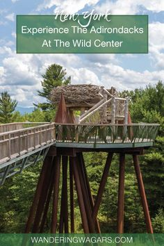 Experience the Wild Center New York and discover why this is the Wildest Adirondack Adventure Center in Upstate New York. Usa Travel Guide, Travel Usa, Travel Tips, Tupper Lake, Adventure Center, Us Travel Destinations, Arizona Travel, United States Travel, New York Travel