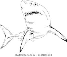 Tattoo Sketches, Drawing Sketches, Sketching, Great White Shark Attack, Designs To Draw, Drawing Designs, Realistic Animal Drawings, Shark Drawing, Shark Art