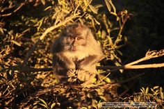 A naughty little macaque on the peak of Mount Batur, an active volcano in Bali.