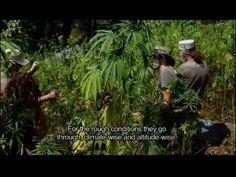 Strain Hunters India Expedition (FULL HD MOVIE)#fumarfree#vapear#legalizacion#vapear#vap#bho#vaplifestyle