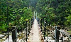 Lush rainforest on the southern island of Yakushima, Japan. Princess Mononoke was set in this area.