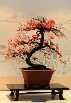 Via fb page I Love Bonsai
