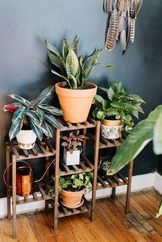 prateleira para plantas