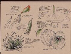 dynamic sketching plants - Google Search