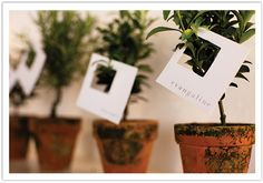 potted herbs or saplings / citrus saplings would be gorgeous / tiny potted topiaries / wedding favors