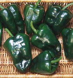 Ancho 101 --- When fresh and still green, these mildly hot, heart-shaped peppers are stuffed and made into chiles rellenos. When mature they are dark, rust red, richly flavored, and often dried and ground into chili powder. Peppers become 4 inches long, tapering to a blunt point. Wrinkled skin takes on even more character when dried. May be strung into long ropes or made into wreaths.. 76 to 80 days.