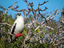 Galapagos Islands, Ecuador -- a biology lesson any teen would love