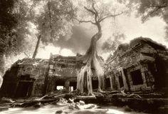 Ta Prohm - Temple in the famous game Tomb Raider (http://en.wikipedia.org/wiki/Ta_Prohm)