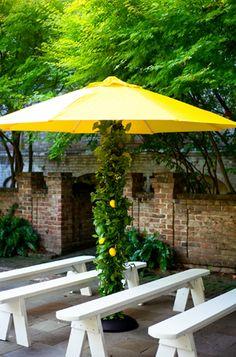 ahhh ~ citrus up the umbrella pole!!!