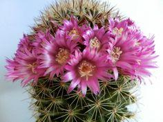 Cactus by Bernhard Bossert on 500px