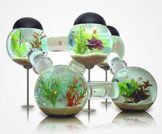 Model Aquarium Unik - Banyak cara yang bisa kita lakukan untuk membuat tempat tinggal atau rumah kita terlihat indah dan nyaman, dan salah