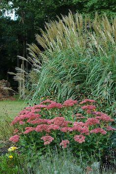 Herfsttuin, mooi met grassen en sedum
