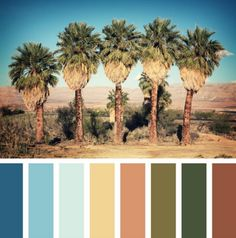 Are you a lover of the sunshine state? Bring the landscaping to your home with this tropical color palette!