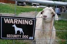 Happy Monday! Sometimes you just need a laugh. #security