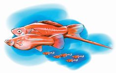 Five Steps for New  Fish Breeders