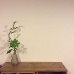 Container: Original container by Aso Kojima Material: Solomon's seal and Alpine bistort   花器:小嶋亜創創作花器 花材:鳴子百合、虎の尾  #花 #いけばな #flower #ikebana #art #instagood #Japan #小嶋亜創