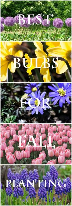 Best Bulbs to Plant in the Fall If you want spring blooms, fall bulb planting is a must. Here is a list of bulbs plus tips and advice for the DIY gardener. Includes when to plant according to growing zones. Garden Bulbs, Planting Bulbs, Garden Plants, Planting Flowers, Flower Gardening, House Plants, Spring Bulbs, Spring Blooms, Organic Gardening Tips