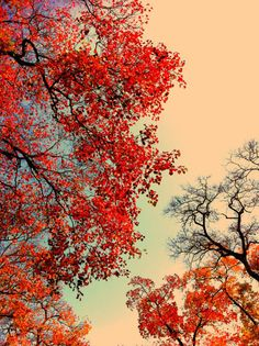 Reminds me of lazy fall days, stareing up at the clouds.  Love this!!!