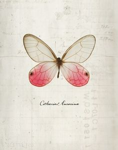 Cabinet de curiosité. Of course, when it's about pinning, one has to pin a butterfly...
